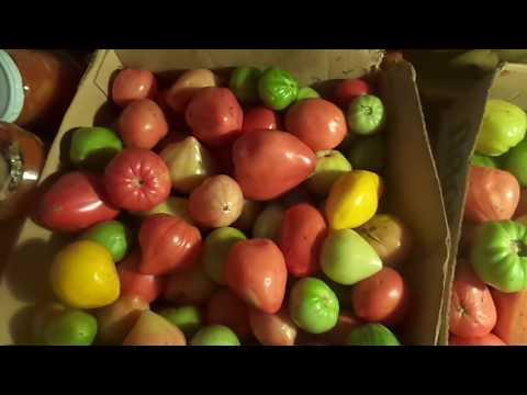 Томат безразмерный: описание, агротехника и отзывы огородников