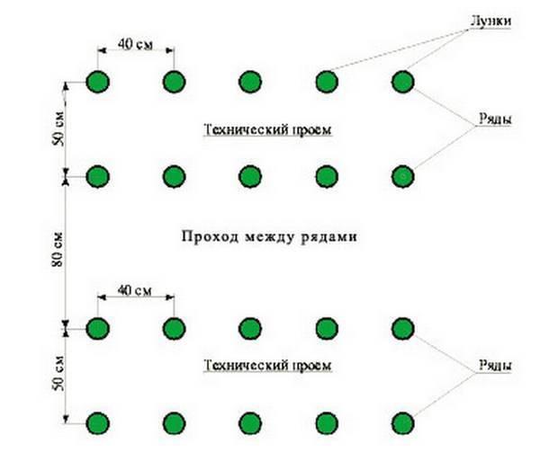 Томаты в теплице: схемы и расстояния между кустами при посадке