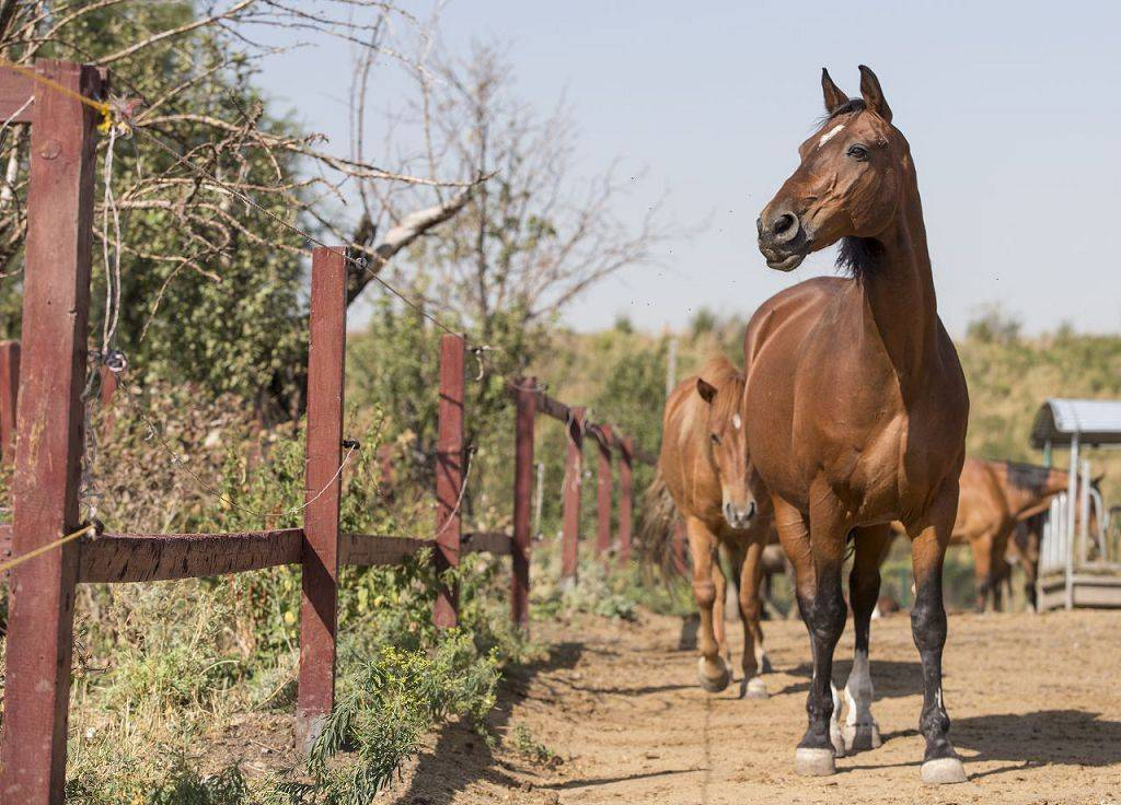 Разведение лошадей