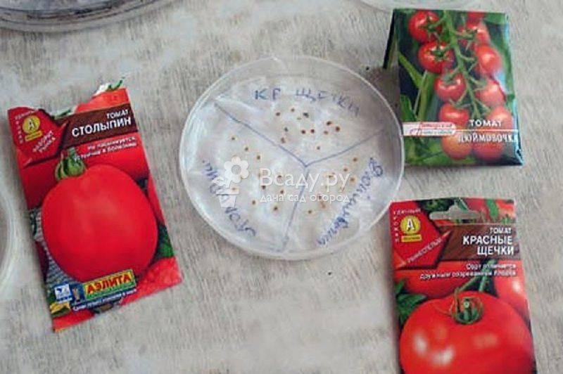 Проращивание семян томатов перед посадкой на рассаду: надо ли осуществлять этот процесс, как правильно подготавливать зерна помидоров, а также дальнейший уход
