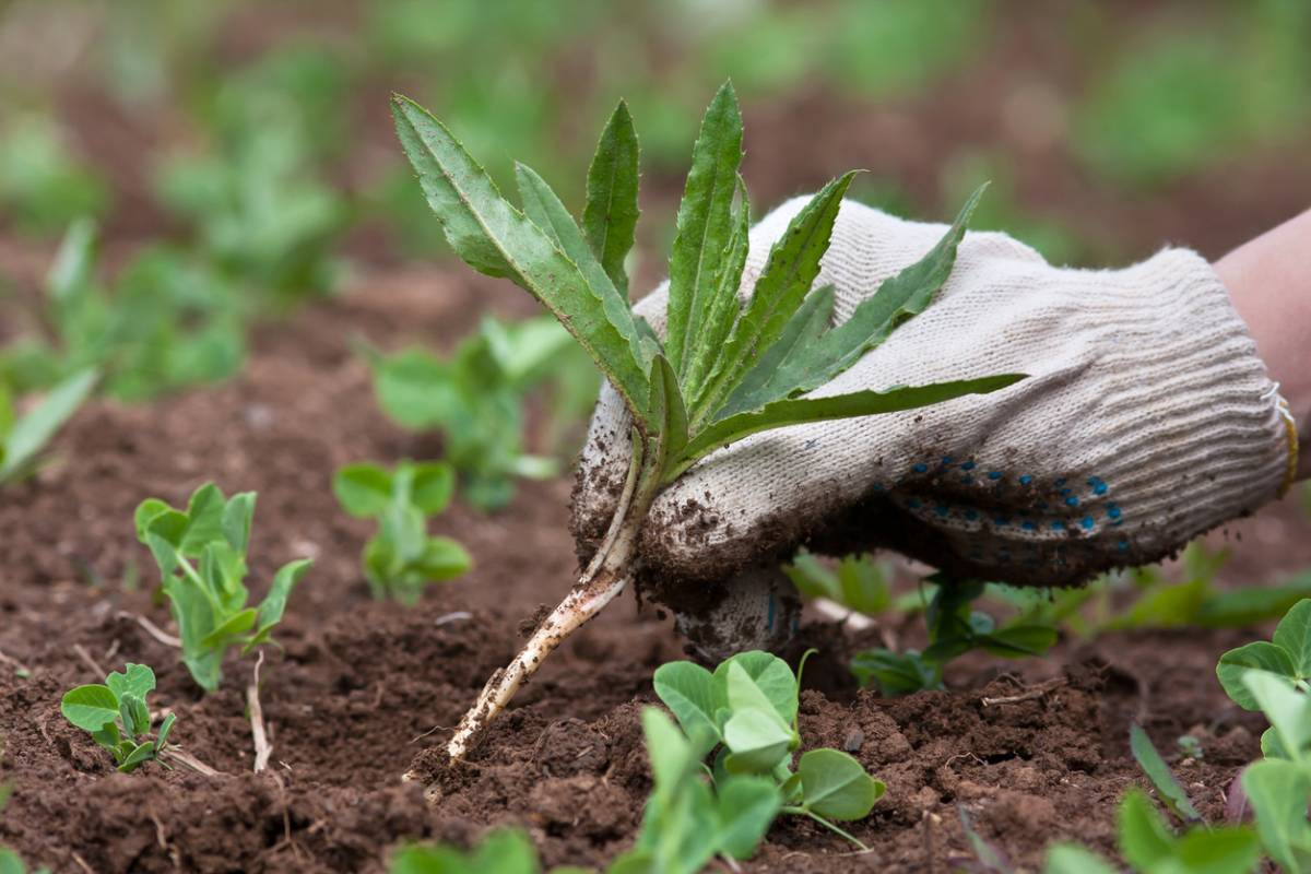 Борьба с тлей на огороде специальными и народными средствами