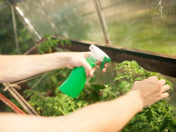 Применение перекиси водорода для рассады и семян