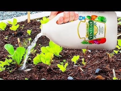 Сода в огороде и в саду