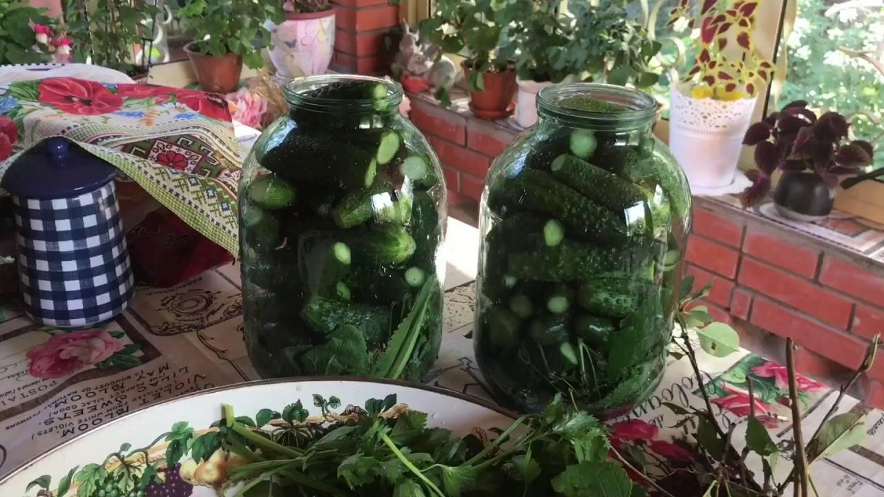 Огурцы в виноградных листьях на зиму, рецепт с фото пошагово