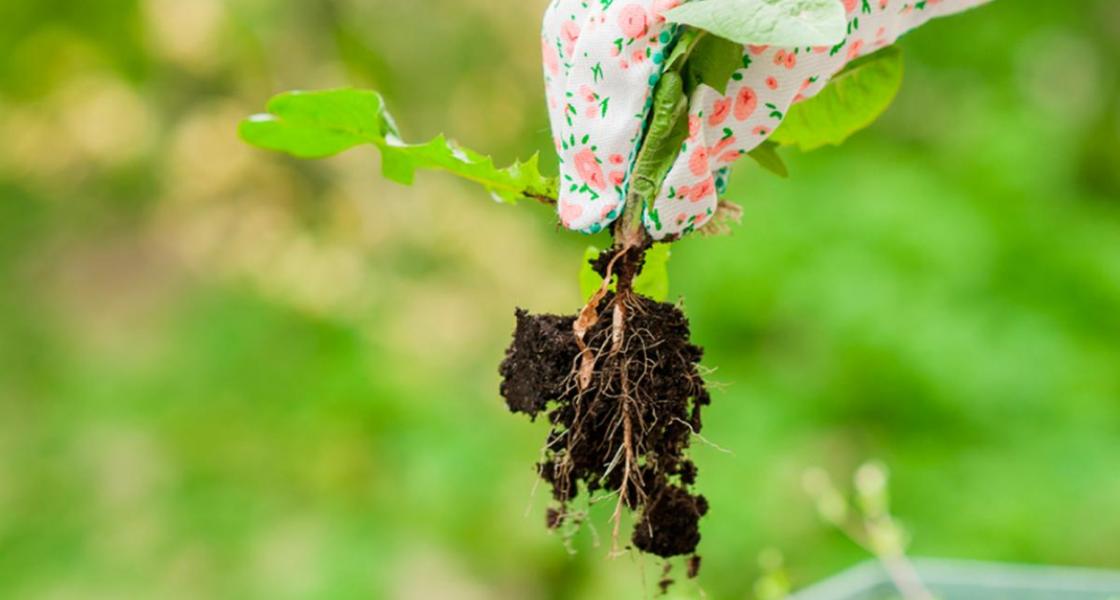 Чем осенью обработать землю, чтобы избавиться от сорняков