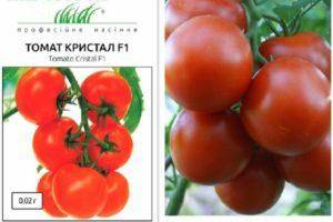 Описание и особенности агротехники урожайного томата пузата хата