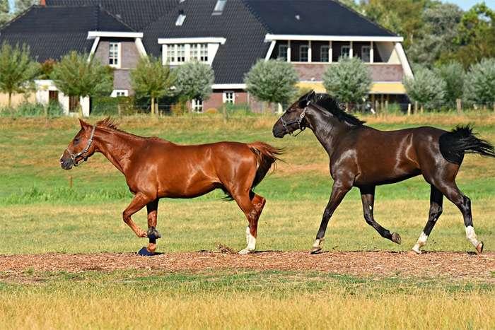 Разведение и размножение лошадей