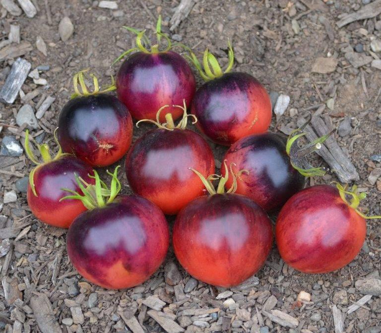 Характеристика и описание томата «розовое рафаэлло»