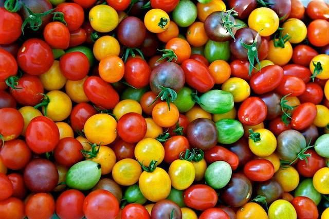 30 лучших сортов томатов для засолки и консервирования