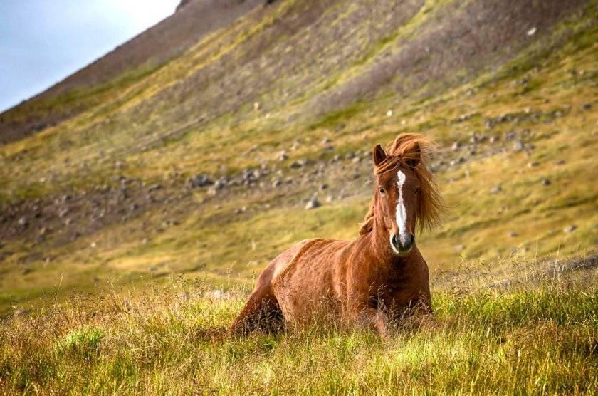 Сколько лет живут лошади?