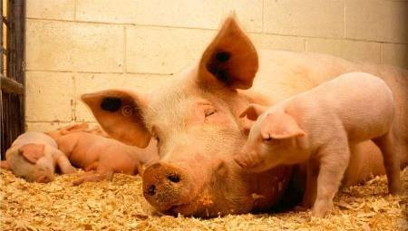 Кормовые добавки для сельскохозяйственных животных — что это такое и их классификация