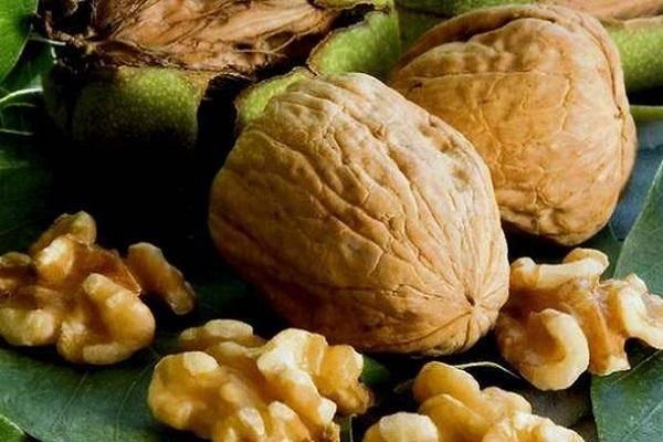 20 лучших сортов грецкого ореха с описание и характеристиками