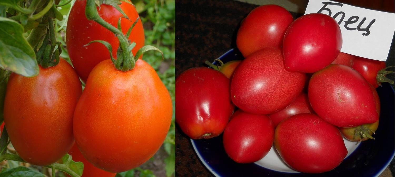 Раннеспелый сорт, идеальный для прохладного климата — томат «буян» и инструкция по его выращиванию
