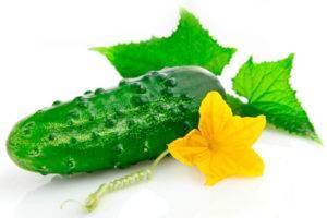 Огурец «апрельский» — описание характеристик сорта f1. посадка, уход, урожайность и выращивание из семян, фото