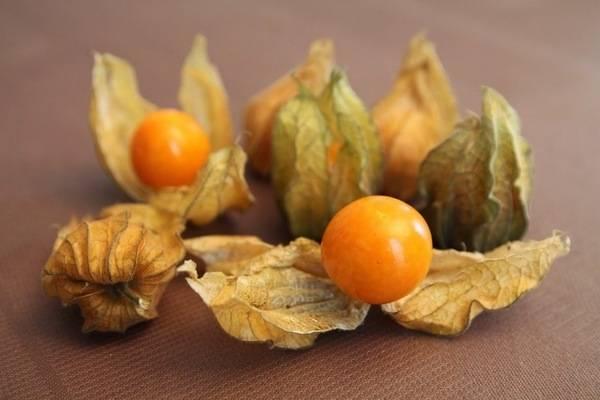 Все о физалисе: сорта, выращивание, уход и рецепты