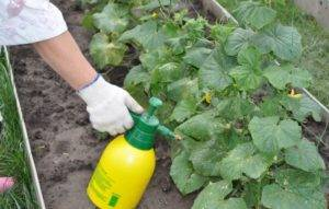 Йод: применение на огороде и в саду