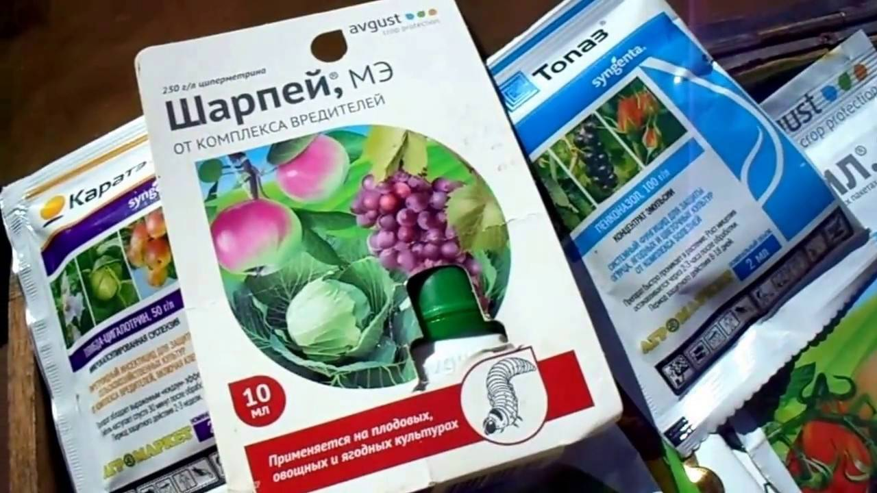 Проверенные способы обработки малины весной от болезней и вредителей