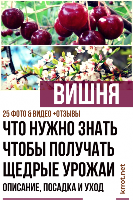 Описание вишни «любская»