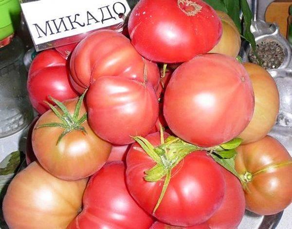 Описание сорта томата Император, особенности выращивания и ухода