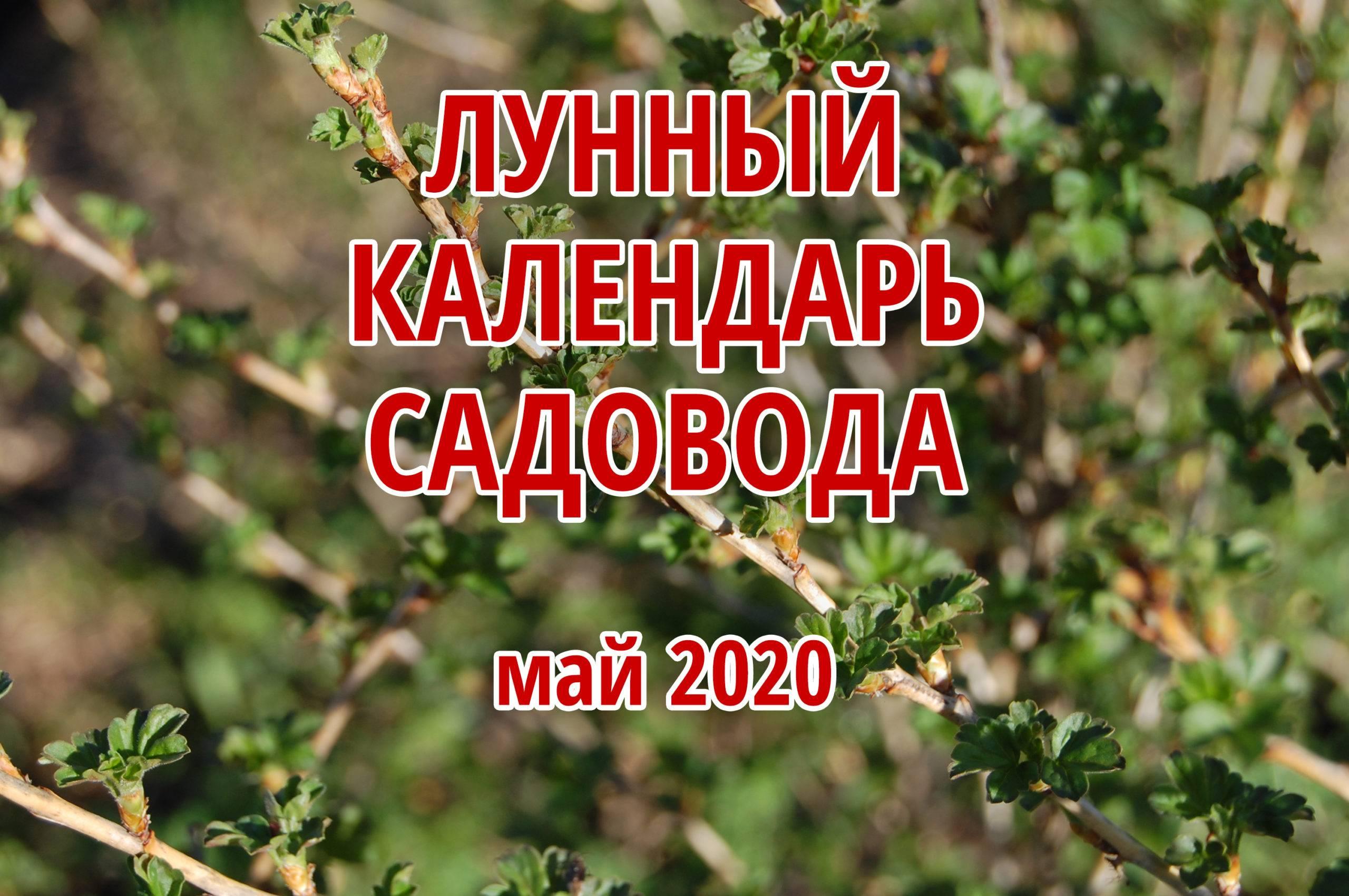 Благоприятные дни для посадки огурцов в открытый грунт в 2020 году по лунным фазам