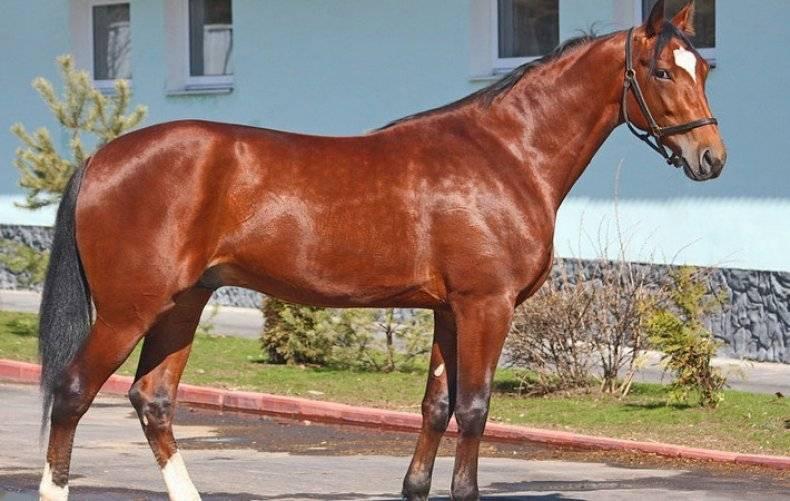 Породы лошадей — самые популярные, необычные и ценные породы. 150 фото и видео как определить породистую лошадь