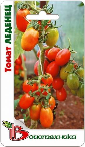 Какие посадить помидоры в теплице и в открытом грунте: лучшие предложения 2020 года