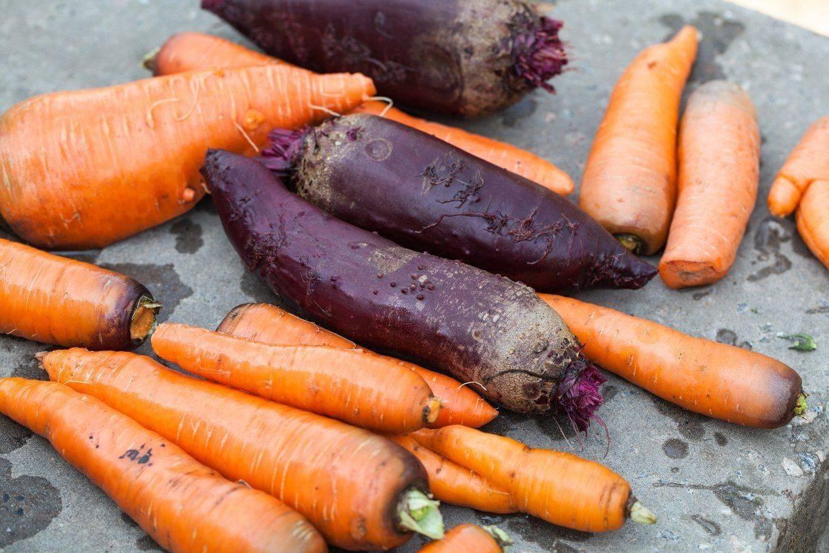 Когда убирать морковь с грядки и как правильно ее хранить