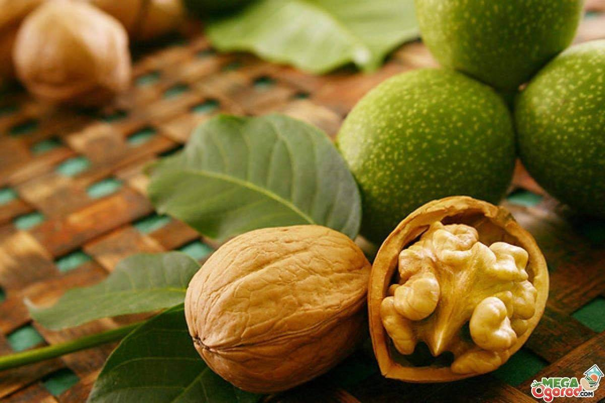 Срок и условия хранения кедровых орехов