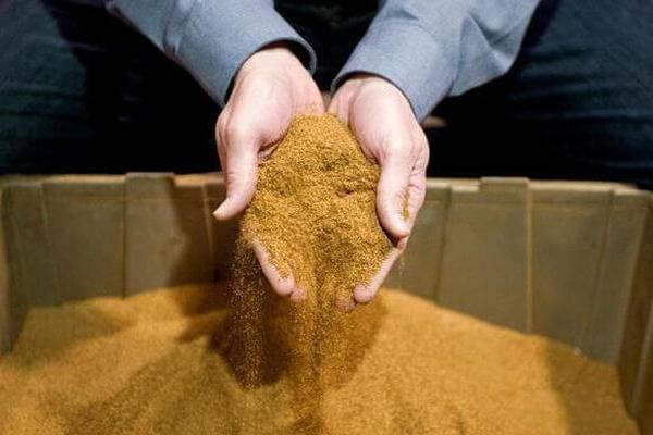 Как использовать табачную пыль для капусты