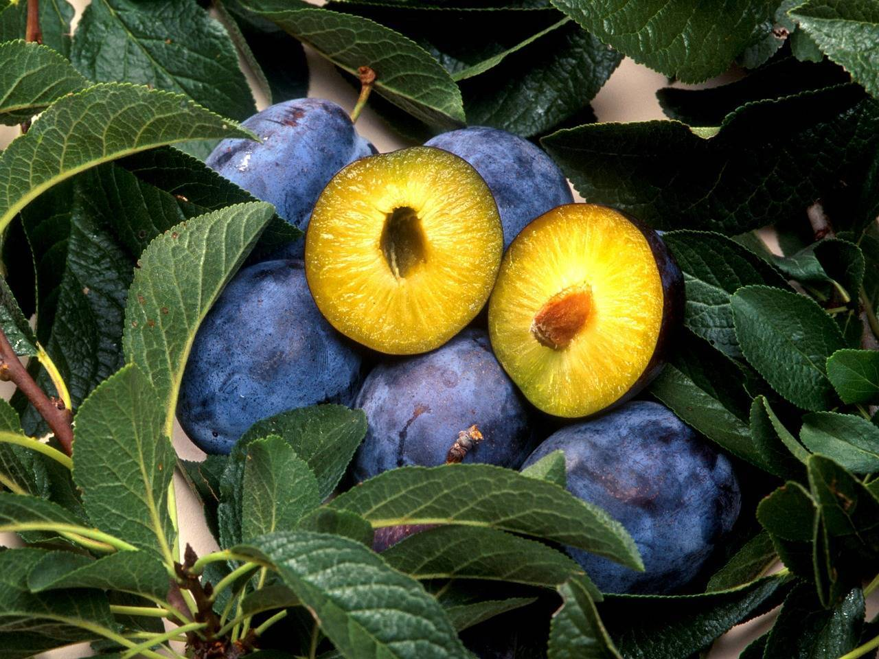 Как вырастить сливы из косточки в домашних условиях, чтобы были плоды