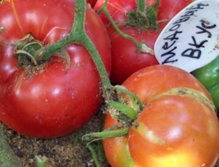 Крупноплодный сорт томата «медовый гигант»: описание, характеристика, посев на рассаду, подкормка, урожайность, фото, видео и самые распространенные болезни томатов