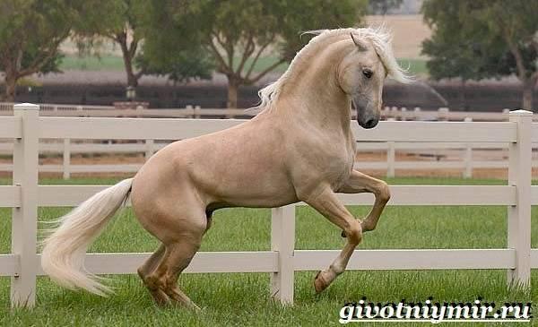 Что значит каурая лошадь