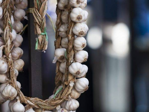 Способы плетения чеснока в косу для хранения