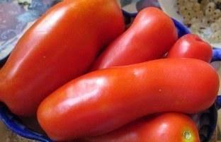Характеристика и описание сорта томата Жигало, его урожайность