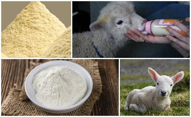 Как развести сухое молоко: пропорции, особенности приготовления, рецептура. состав и область применения