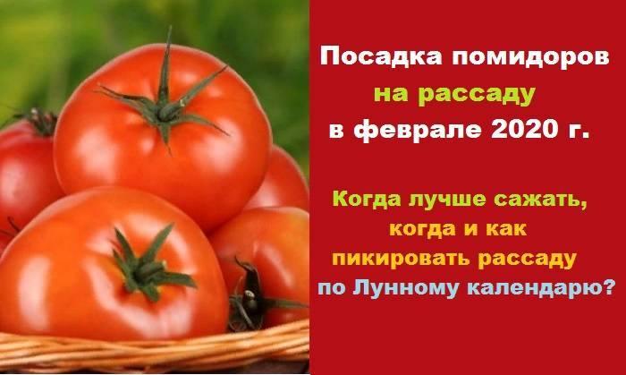 Благоприятные дни для посадки томатов в теплице в 2020 году по луне