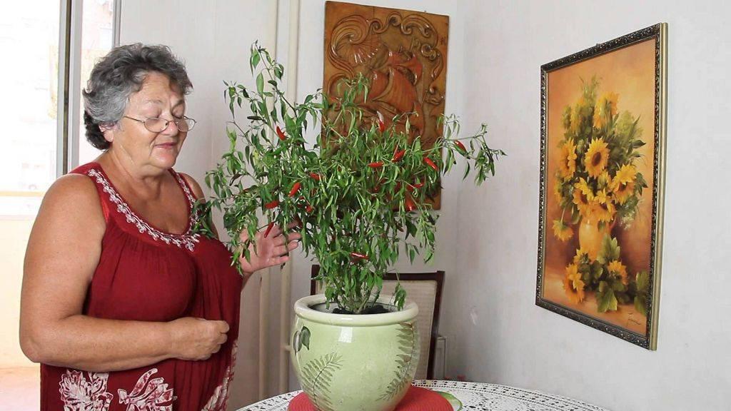 Отличительные характеристики острого сорта перца хабанеро и особенности его выращивания