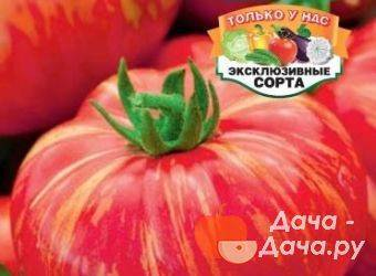 Томат мохнатый шмель: характеристика и описание раннеспелого сорта с фото