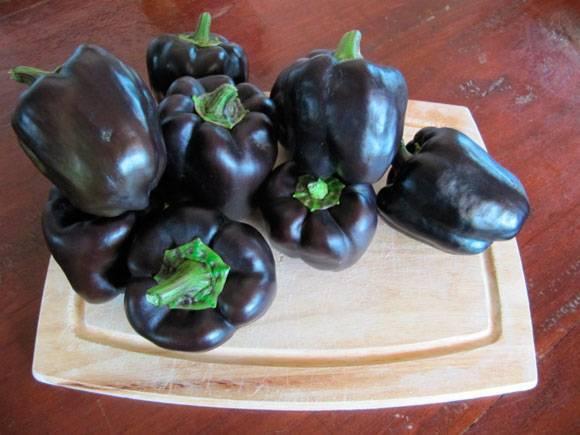 29 превосходных сортов сладкого перца для теплицы и открытого грунта