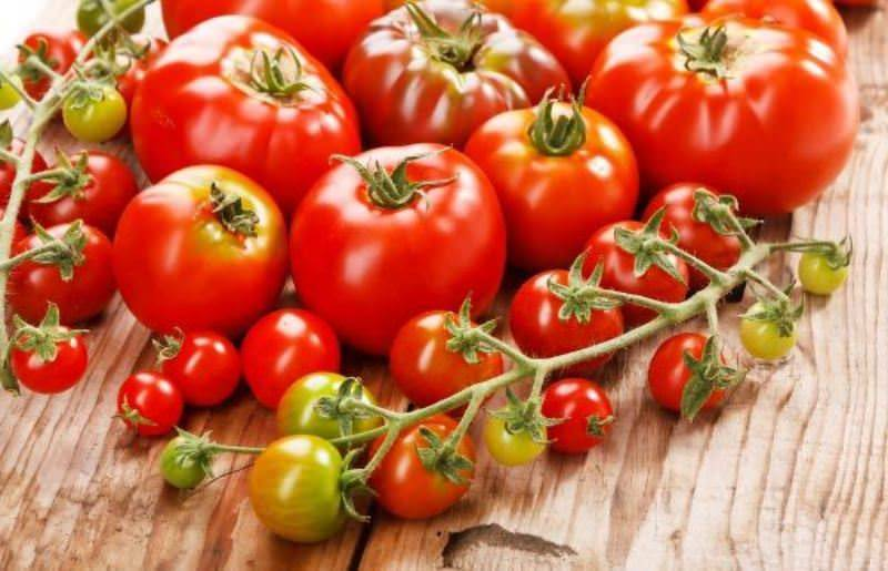 Специально для краснодарского края: лучшие томаты для южного региона