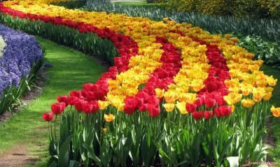 С чем посадить тюльпаны