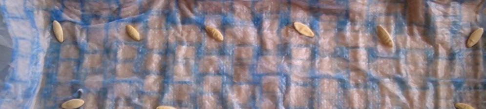 Надо ли замачивать семена огурцов перед посадкой