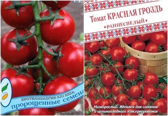 Ранняя сладость: рассказываем о томате чудо гроздь