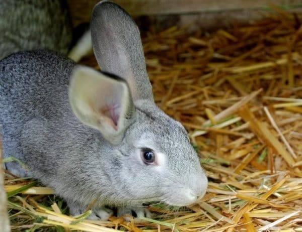 Тимпанол: применение в ветеринарии