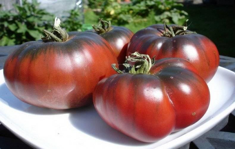 Томат черноморец: характеристика и описание сорта, фото плодов