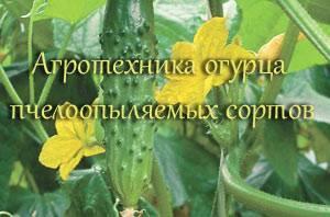 Лучшие сорта огурцов для теплиц на 2018-2019 годы