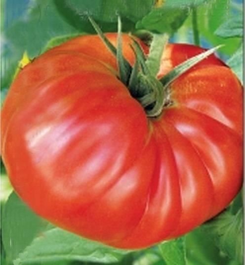 Характеристики и описание разных сортов томатов-гигантов