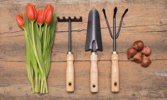 Посадка тюльпанов осенью: когда и как посадить
