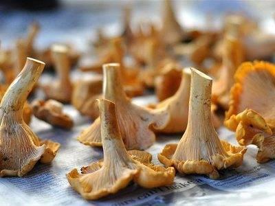 Лечо с грибами: рецепт на зиму, вариант приготовления с лисичками и шампиньонами