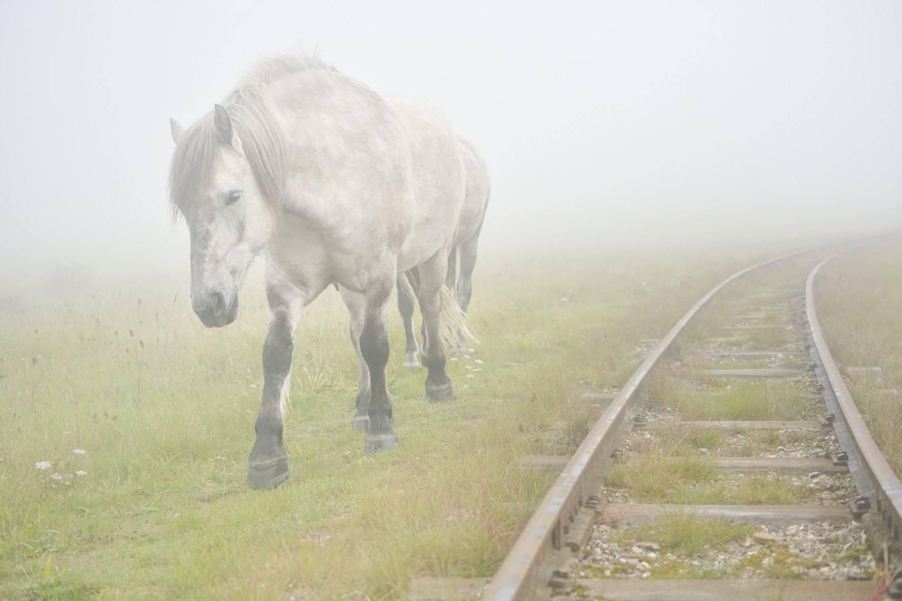 Зубы лошадей: виды зубов лошадей, смена и прорезывание, особенности ухода, болезни и лечение